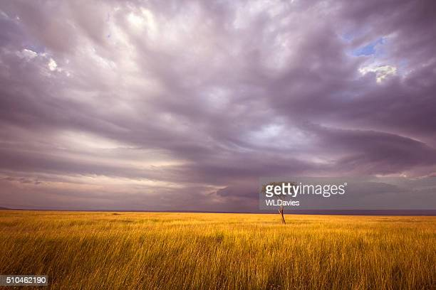 africa landscape - horizon over land stock photos and pictures