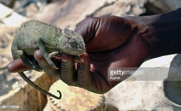 Africa, Mali, View Of African Man With Live Lizard On Hand In Voodoo Area (Year 2007)
