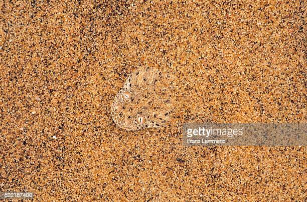 Africa, Namibia, adder in the sand