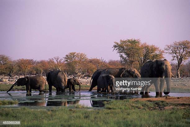Africa Namibia Etosha National Park Elephants At Waterhole