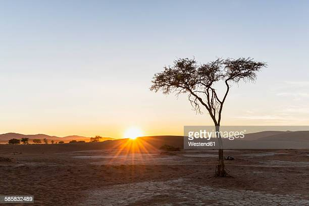 Africa, Namibia, Namib Desert, View to desert dunes and acacia at sunrise, Namib-Naukluft National Park