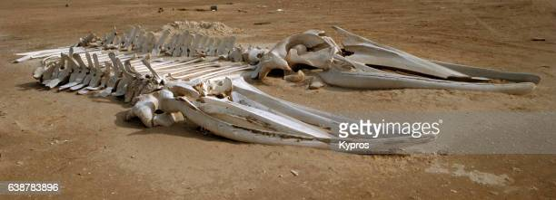 africa, north africa, mauritania, view of skeleton of whales on the beach (year 2000) - animal skeleton imagens e fotografias de stock