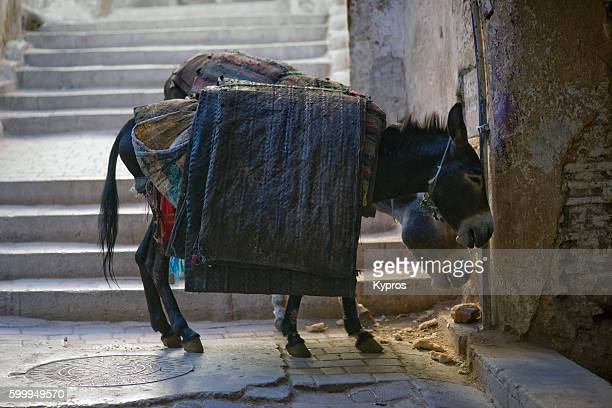 Africa, North Africa, Morocco, Fez Area, View Of Donkey Carrying Goods To Market (As The Streets Are Too Narrow For Most Vehicles)