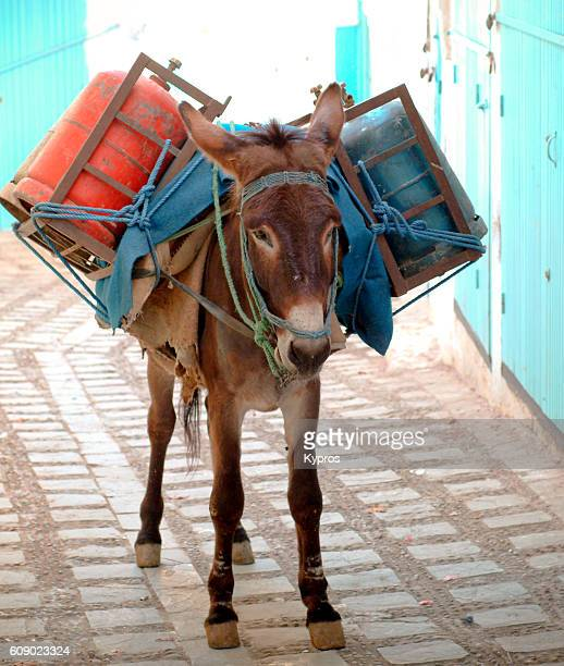 Africa, North Africa, Morocco, View Of Donkey Carrying Metal Gas Cylinders (Year 2007)
