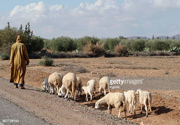 Africa, North Africa, Morocco, View Of Goat Herder Wearing Djellaba, A Long, Loose-Fitting, Unisex, Outer Robe Or Coat (Year 2007)