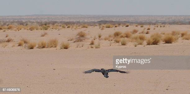 Africa, North Africa, Niger, View Of Bird Of Prey Flying In Sahara Desert (2007)