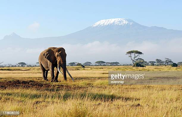 africa - kenya stock pictures, royalty-free photos & images