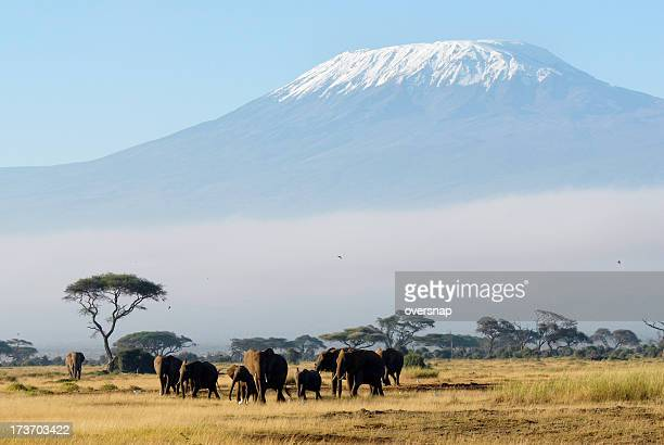 africa - kilimanjaro stock photos and pictures