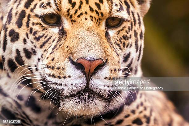 africa - daniele carotenuto stock pictures, royalty-free photos & images