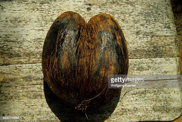Africa, Seychelle Islands, Nut Of The 'coco De Mer' Palm Tree.