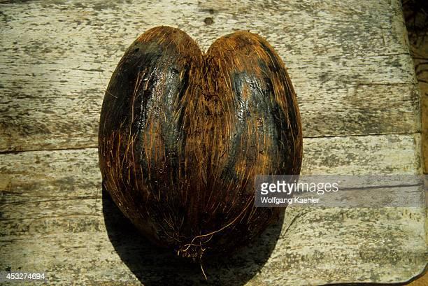 Africa Seychelle Islands Nut Of The 'coco De Mer' Palm Tree