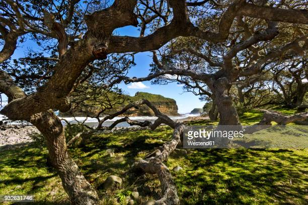 africa, south africa, eastern cape, coffee bay, hole in the wall, tree - eastern cape stock pictures, royalty-free photos & images