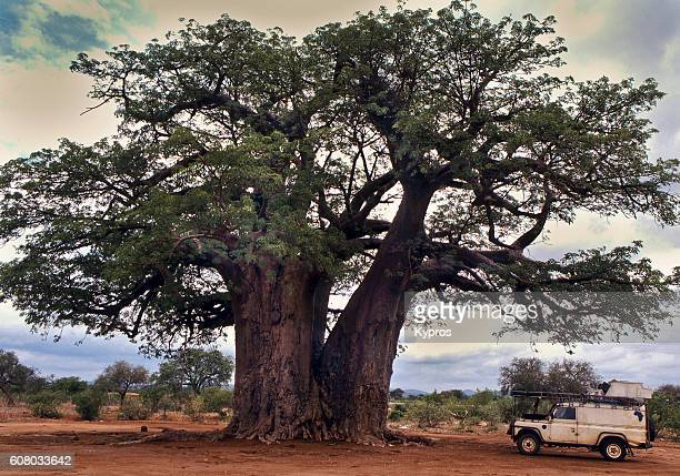 Africa, Southern Africa, Zimbabwe, View Of Baobab Tree And Kypros Expedition Vehicle (Year 2000)