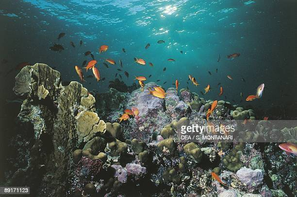 Africa Sudan Red Sea floor abyssal fishes