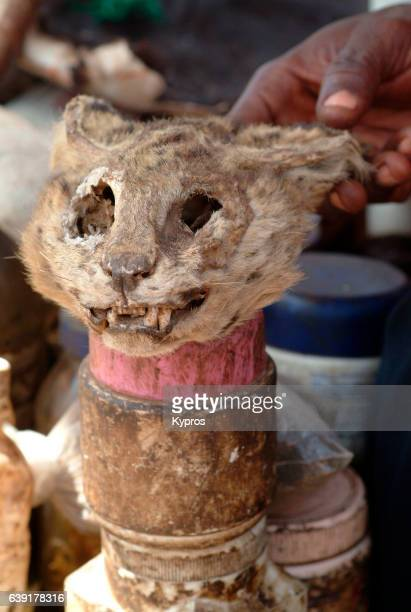 africa, west africa, mali, view of african voodoo items, cat head (year 2000) - cat skeleton stock photos and pictures