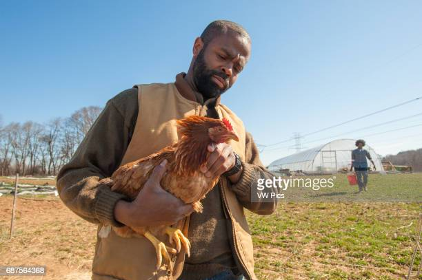 African America farmer with chicken