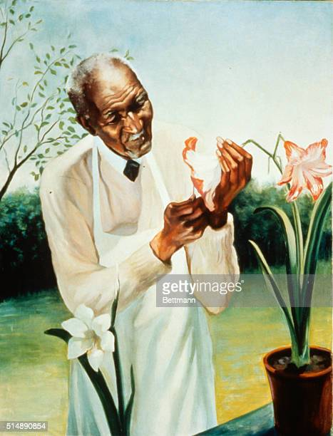 African American botanist born of slave parents looking at flowers Painting by Betsy Graves