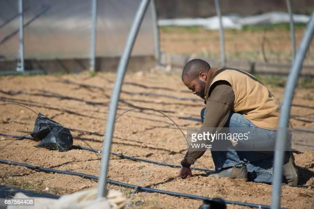 African American farmer examining irrigation system