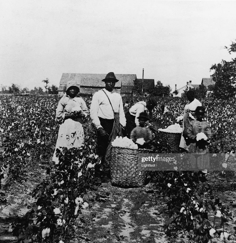 Sharecropper stock photos and pictures getty images african american men women and children pick cotton in a cotton field and place it in platinumwayz