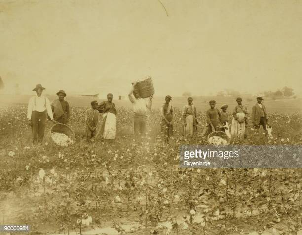 African American men women and children standing in a cotton field some holding baskets containing cotton