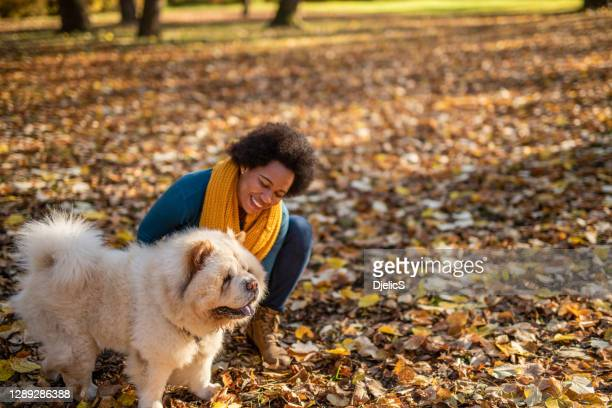 african american woman petting her dog at public park on autumn day. - chow dog stock pictures, royalty-free photos & images