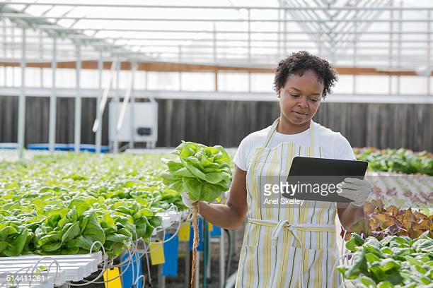 African American woman using tablet computer in greenhouse