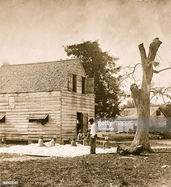 African Americans preparing cotton for the gin on Smith's plantation
