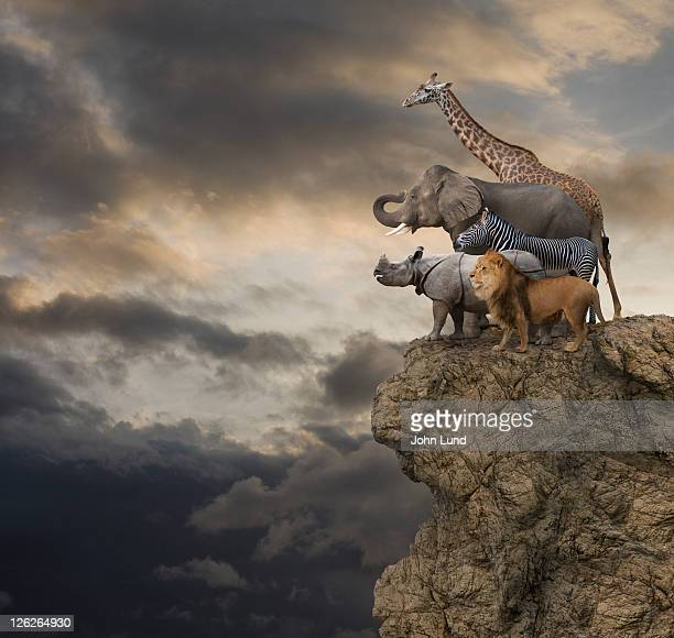 African Animals On The Edge Of A Cliff