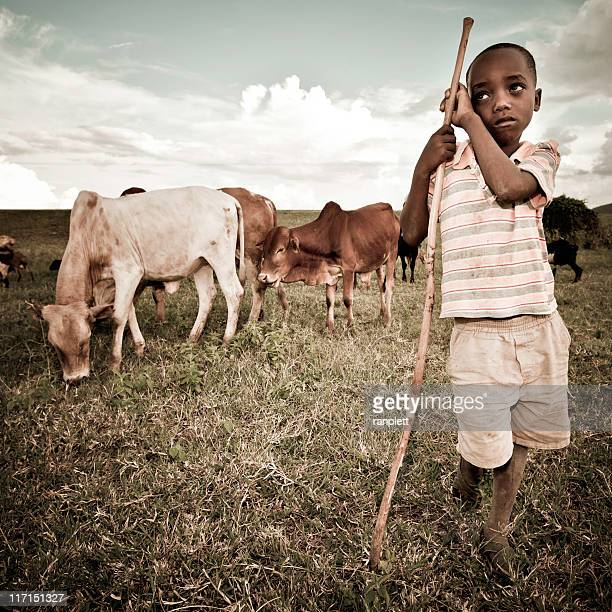 African Boy Watching a Herd of Cattle
