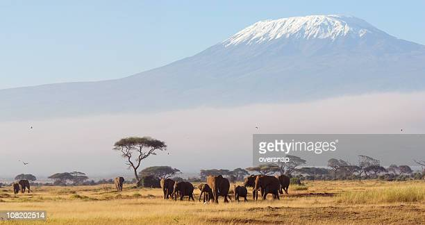 african dawn - kilimanjaro stock photos and pictures