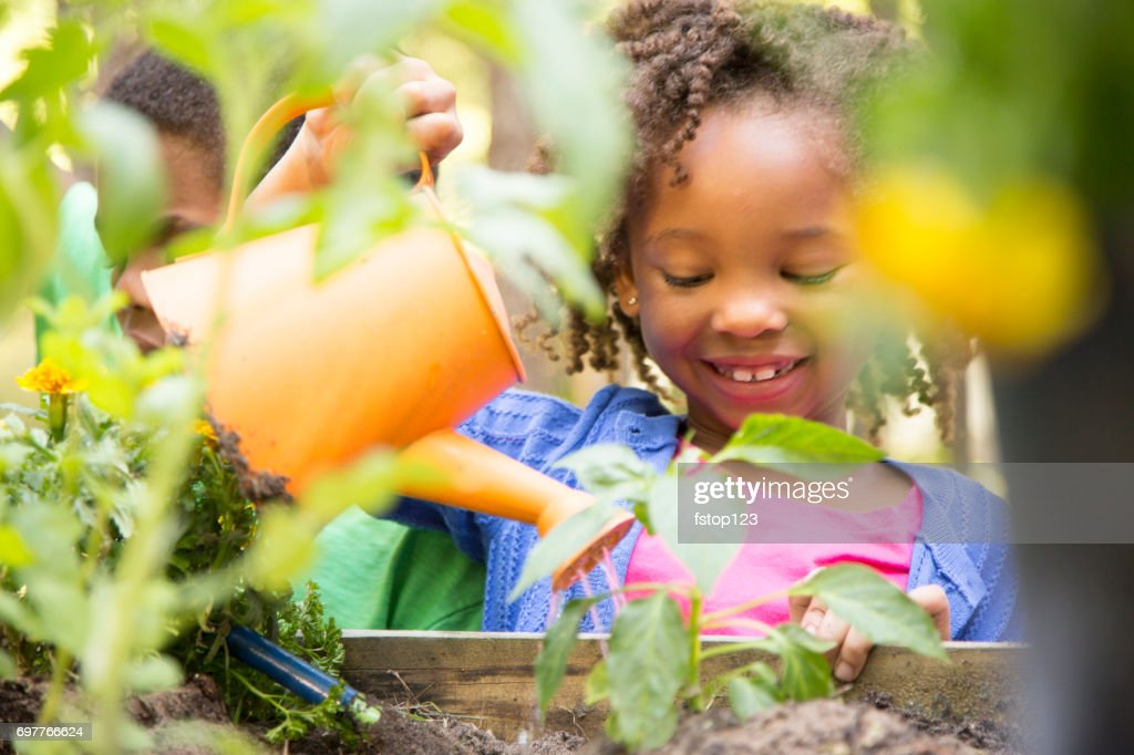 African descent children gardening outdoors in spring. : Stock Photo