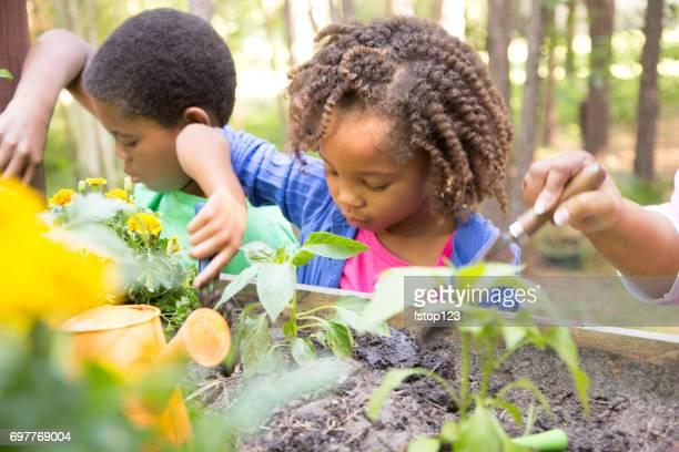 African descent children gardening outdoors in spring.