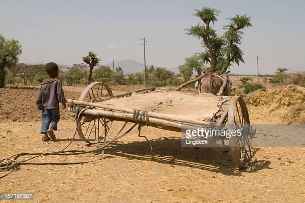 African donkey wagon Ethiopia