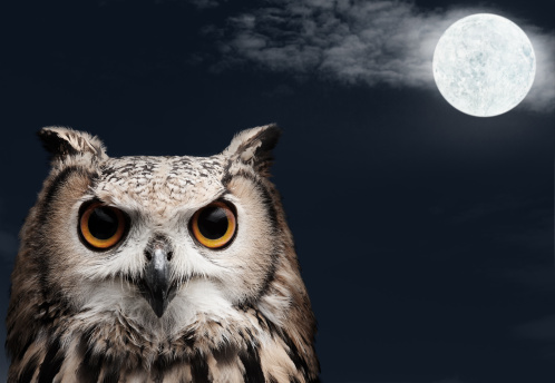 African Eagle Owl 154961676