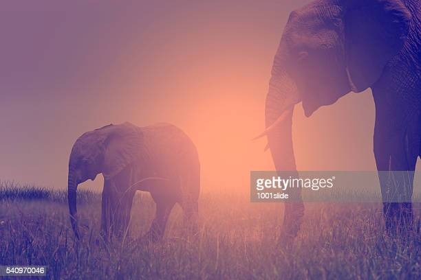 african elephant and baby - baby elephant stock photos and pictures