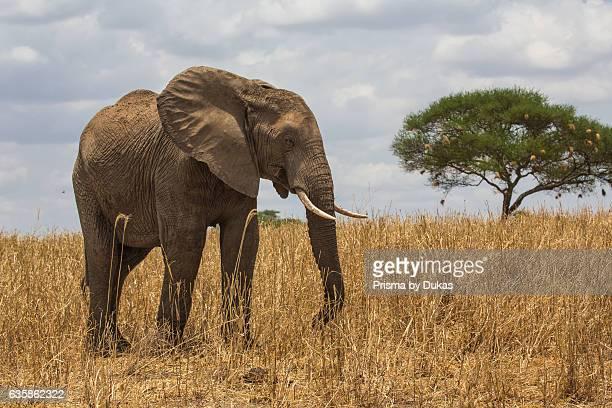 Prisma Bildagentur/UIG via Getty Images
