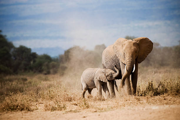 African Elephant Mother And Calf Wall Art