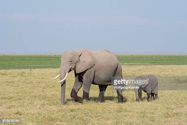 custom order Parent and Baby Elephants