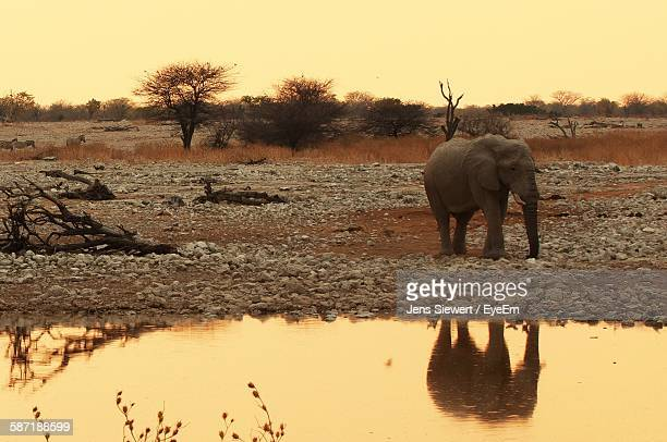 African Elephant Reflection In Pond Against Sky At Etosha National Park
