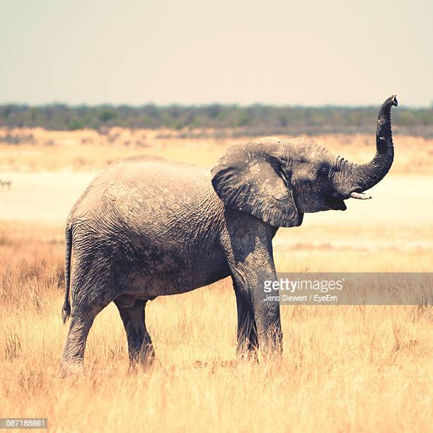 african elephant standing on field against sky at etosha national park - jens siewert stock-fotos und bilder