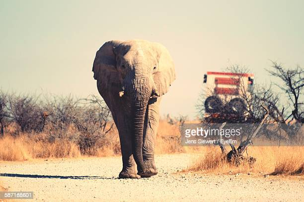 african elephant walking on dirt road against sky at etosha national park - jens siewert stock-fotos und bilder