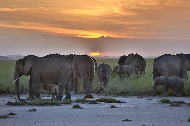 African Elephants At Sunset Wall Art