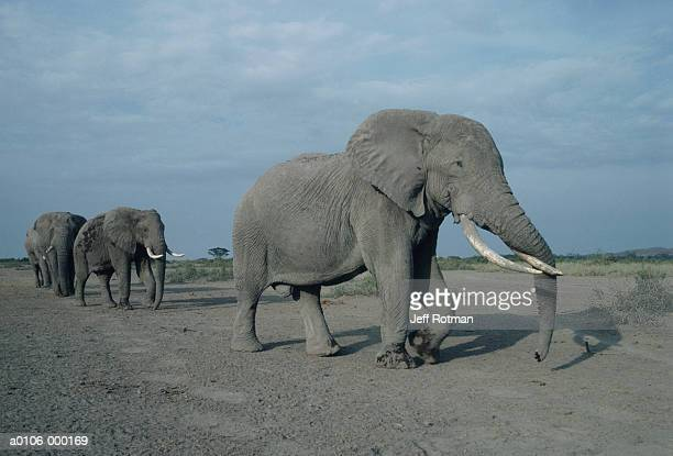 african elephants - eastern african tribal culture stock photos and pictures