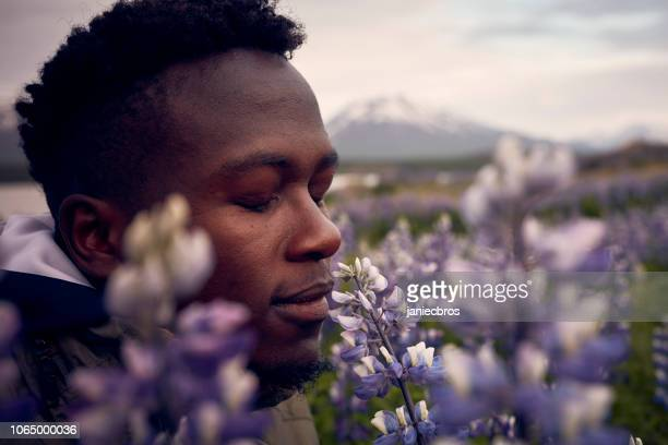 african ethnicity man admiring blooming lupine flowers - scented stock pictures, royalty-free photos & images