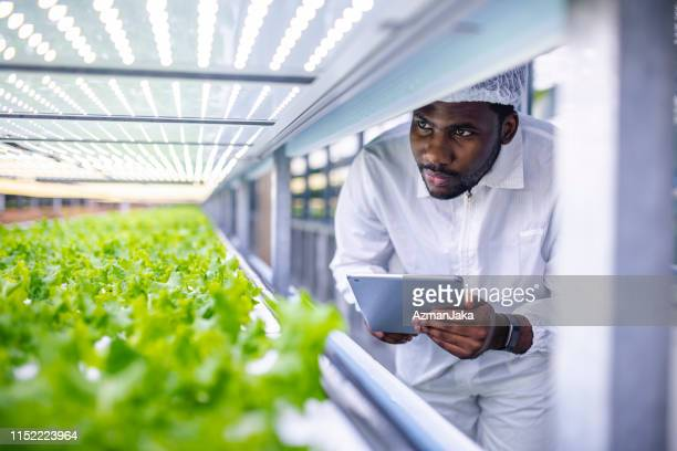 african farm worker noting progress of living lettuce growth - agriculture stock pictures, royalty-free photos & images