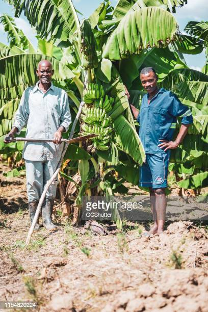 african farmer with his son standing at their banana farm - banana tree stock pictures, royalty-free photos & images