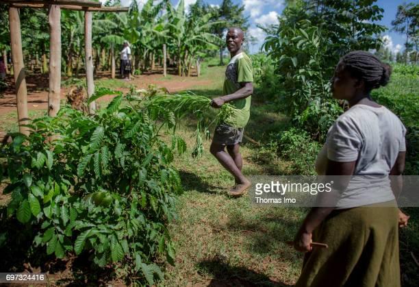 African farmers working on a field in Kakamega County on May 16 2017 in Kakamega County Kenya