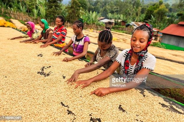 african girls and women sorting coffee beans, east africa - child labour stock pictures, royalty-free photos & images