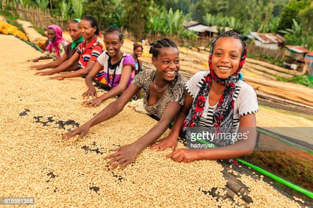 african girls and women sorting coffee beans, east africa - ethiopia stock photos and pictures