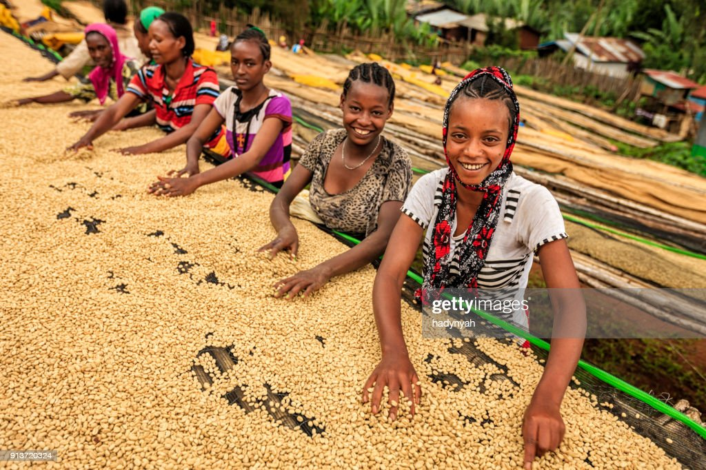 African girls and women sorting coffee beans, East Africa : Stock Photo